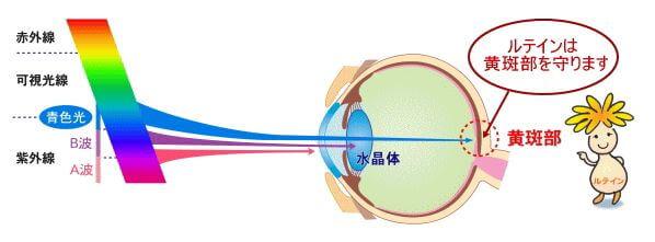 視力の回復 ルテイン